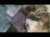 «Животные, пострадавшие от рук людей» под музыку про котёнка - Лесенька, только не плакай(((((! возьмите еще котеночка...им нужен домик!. Picrolla